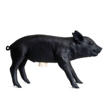 Areaware-Reality-Bank-in-the-Form-of-a-Pig-Black-1