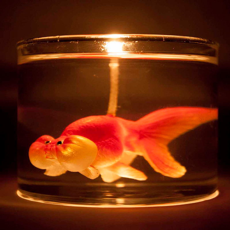 Gold Fish In Jar Candle Beans And Jazz